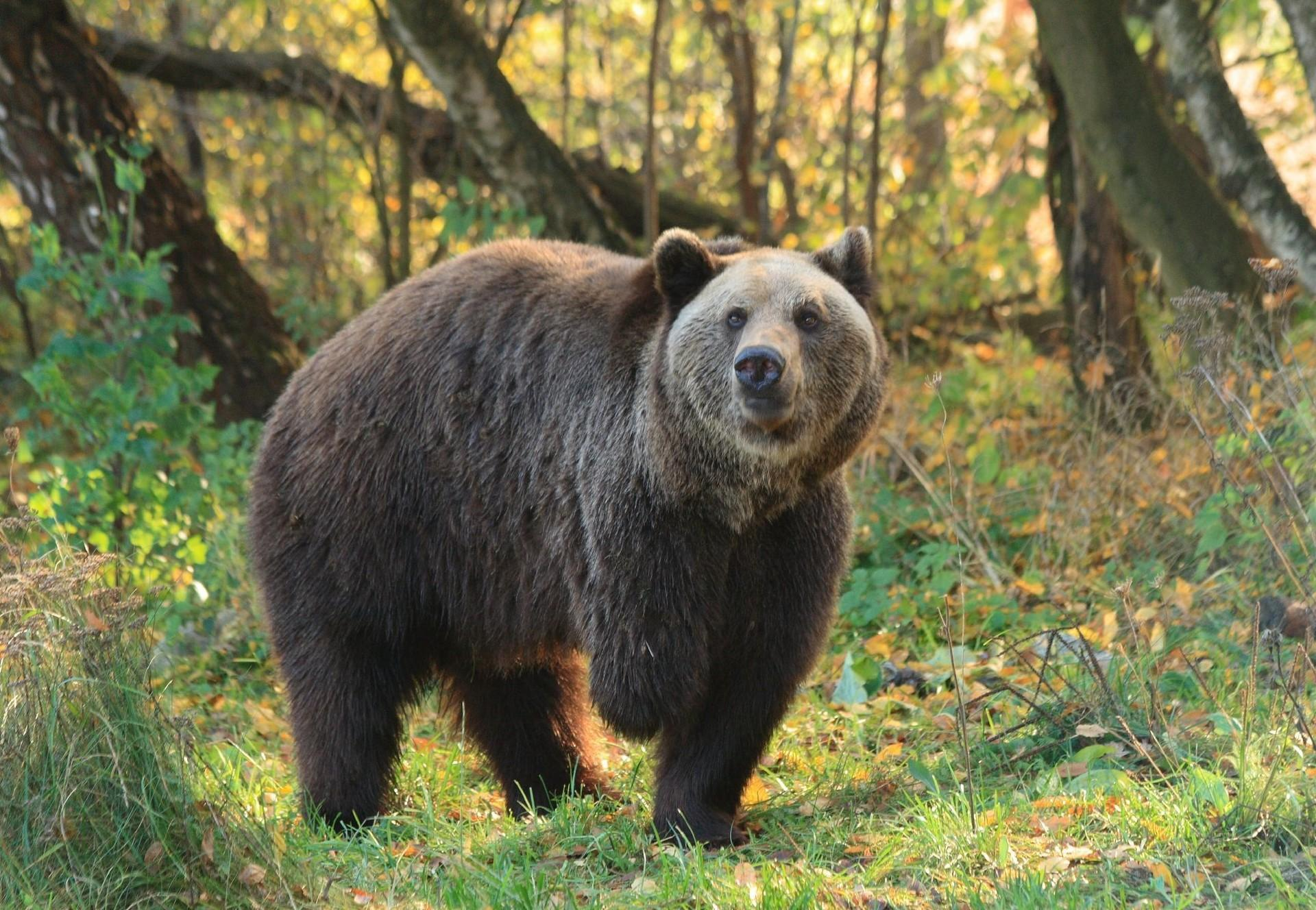 BEAR SANCTUARY Müritz