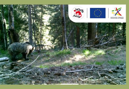 Мечка в гората
