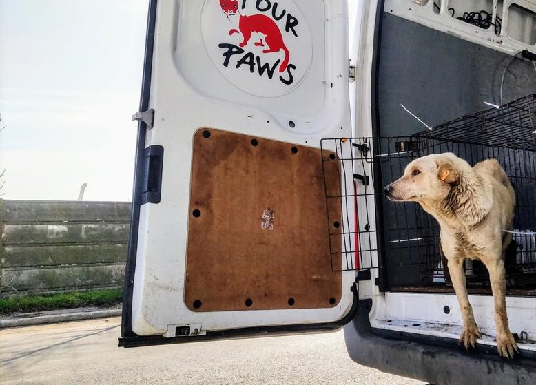 Constanta – from killing to adopting and sterilising strays
