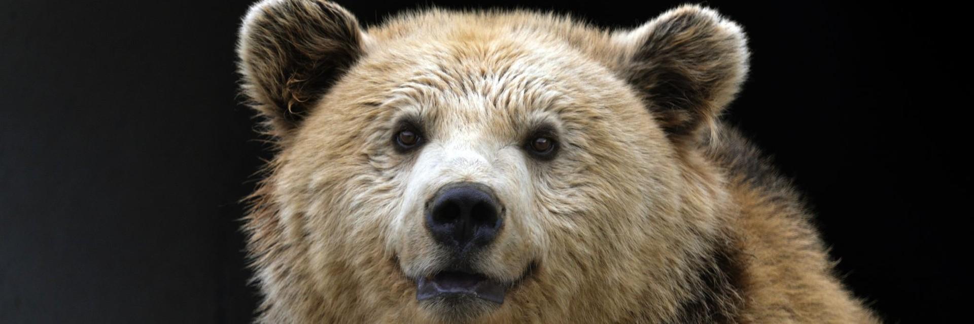 geretteter Bär