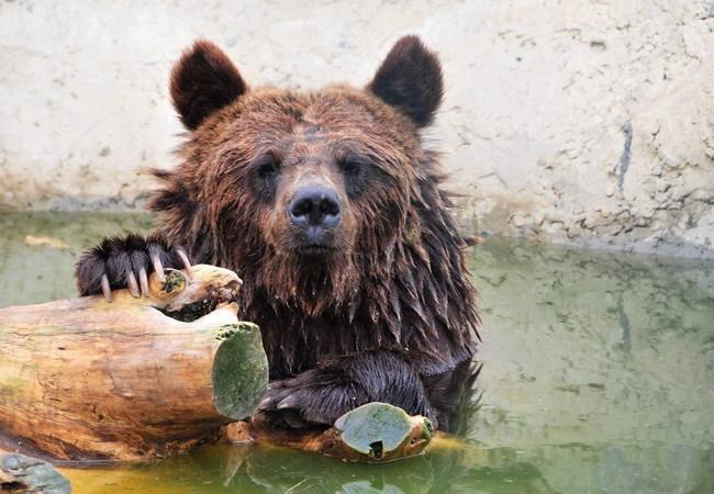 Bear Julia in her pool
