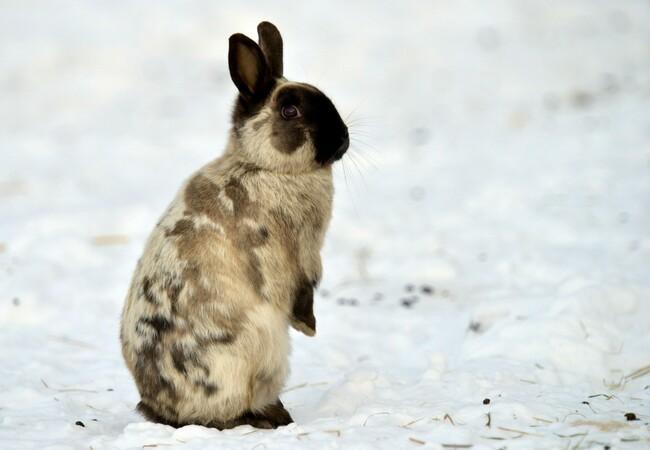 Hase genießt den Schnee in der PFOTENHILFE Lochen