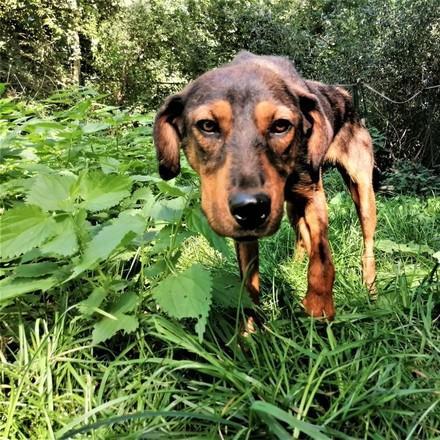 куче Офелия