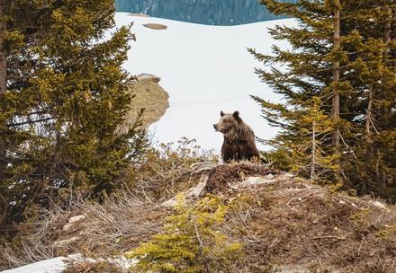 Former circus bear Jambolina explores nature in the Swiss alps for the first time