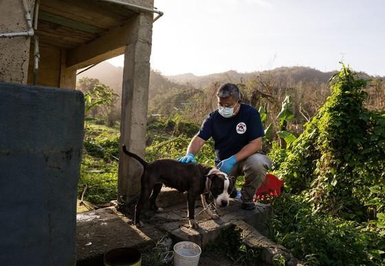 Rettungsmission in Puerto Rico