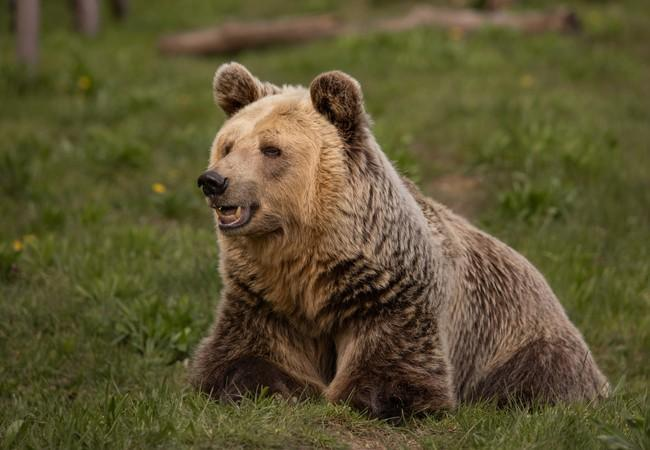 Bear Dushi at BEAR SANCTUARY Mueritz