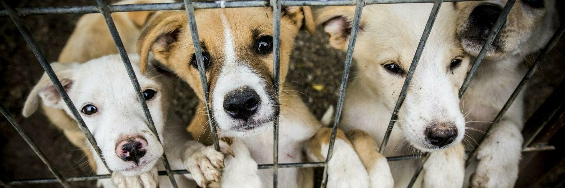 Puppies in a shelter