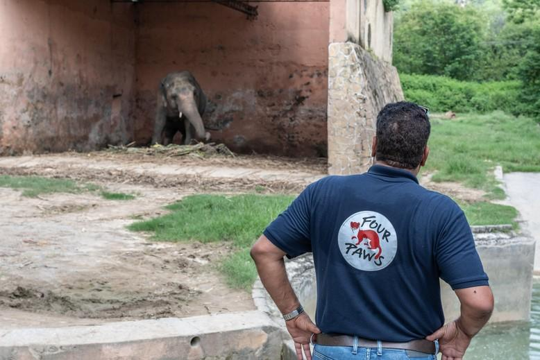 Dr. Amir Khalil mit Elefant Kavaan