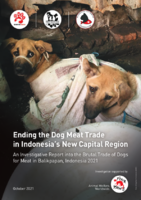An Investigative Report into the Trade of Dogs for Meat in Balikpapan, Indonesia