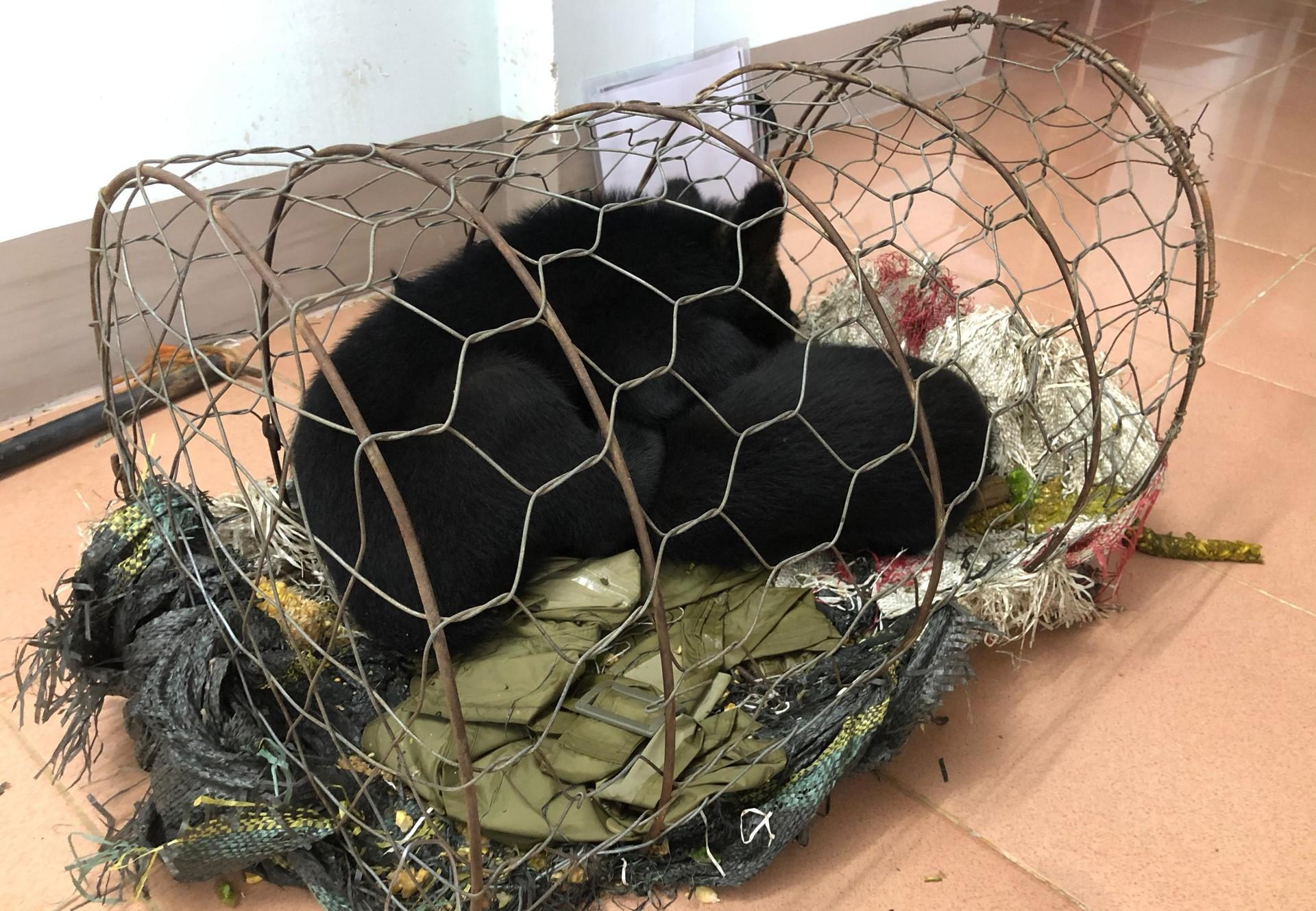 FOUR PAWS rescues two bear cubs from illegal wildlife trade in Vietnam