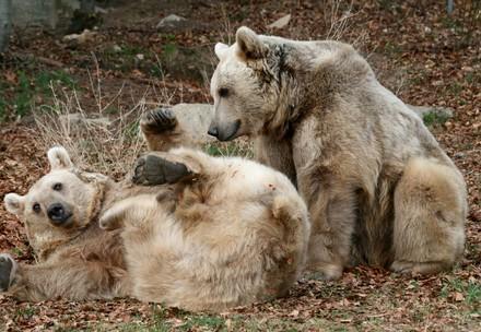 Bärenbruder Tom und Jerry beim Spielen in der Wiese