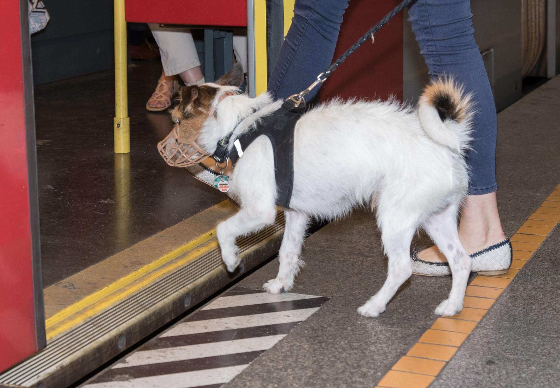 Hund mit Maulkorb in der U-Bahn