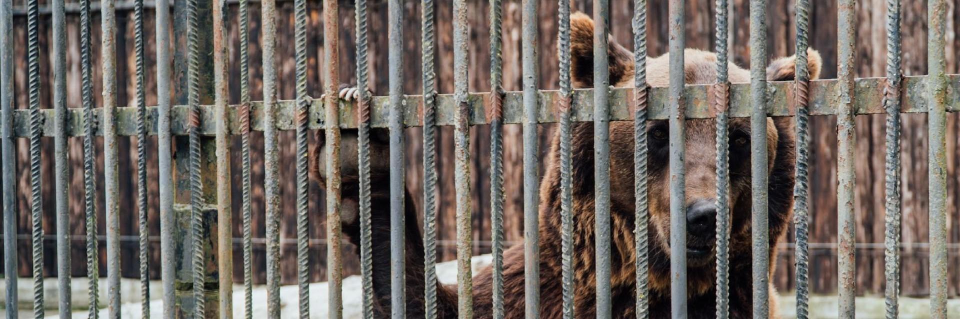 Help ons beren Leo en Melanka te redden