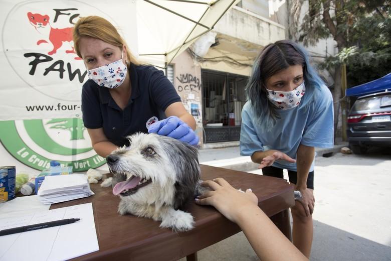 Д-р Марина Иванова помага на кученце в Бейрут
