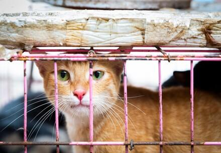 10 facts about dog and cat meat trade