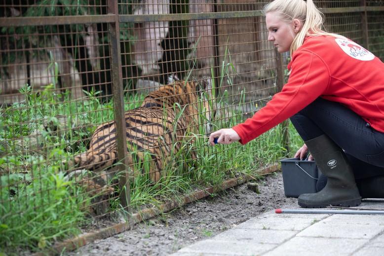 Erin Liewes and tiger Rhadja in 2018