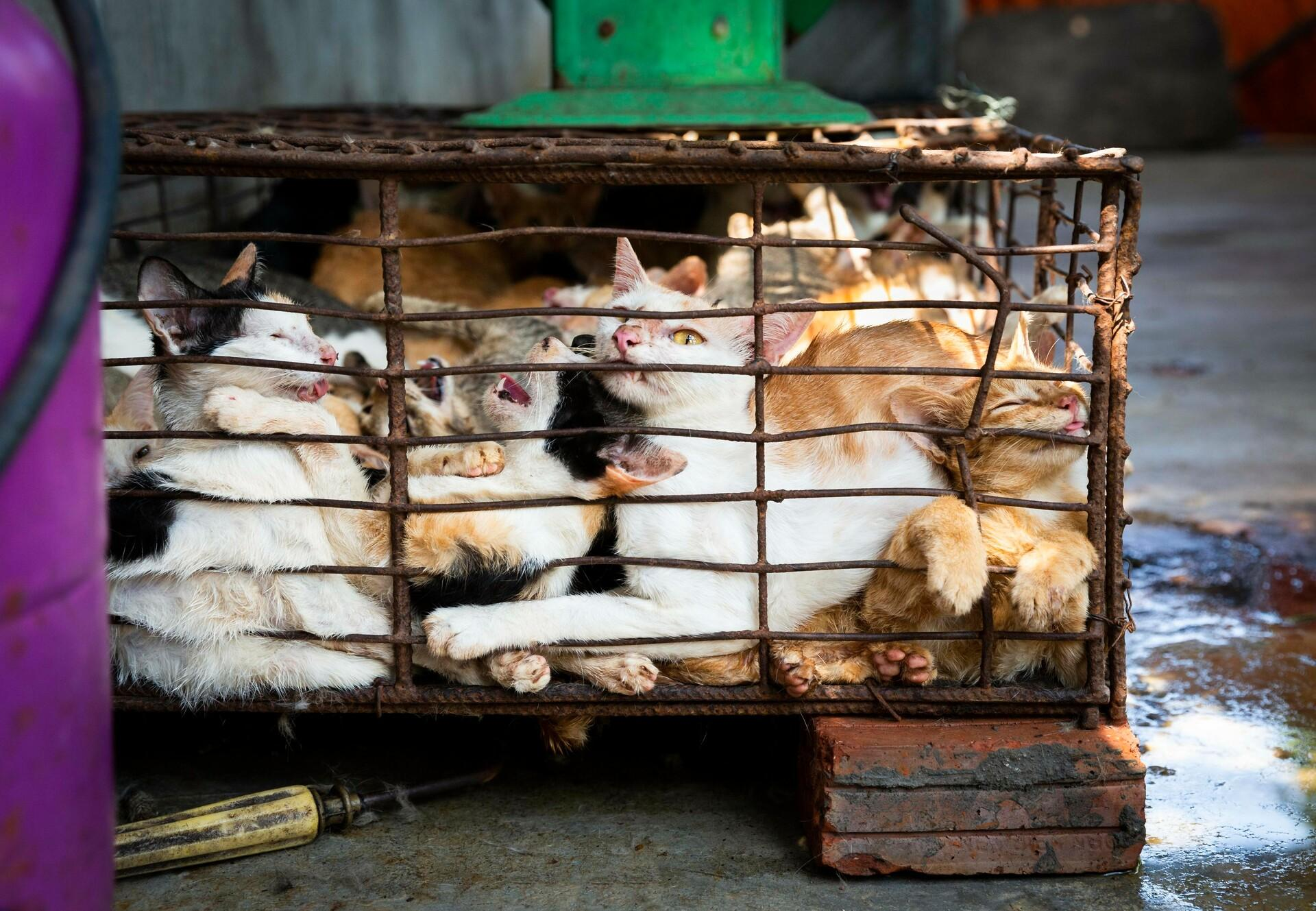 Des chats en cage