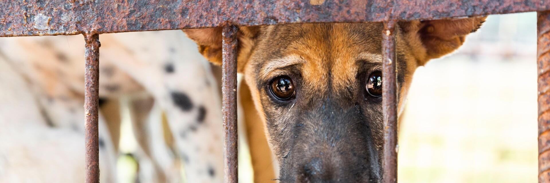 Un chien désolé dans une cage