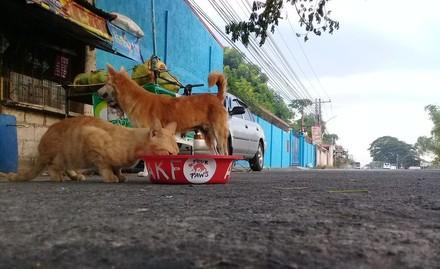 Feeding strays in the Philippines