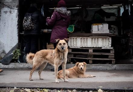 Streunerhunde in der Ukraine