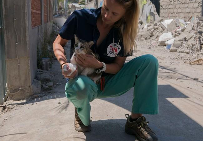 Vet Katherine tends to an injured cat