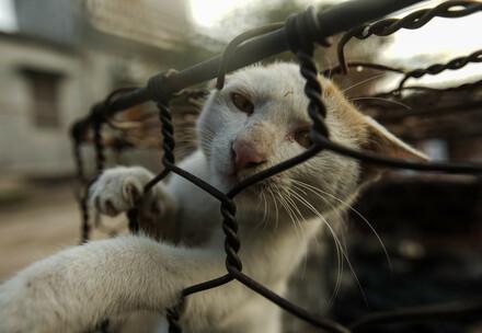 un chat en cage