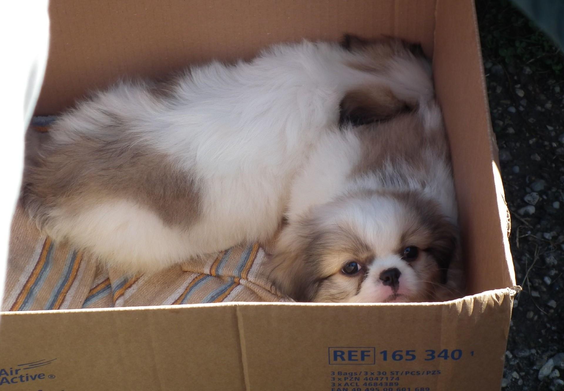 Hundewelpen im Pappkarton