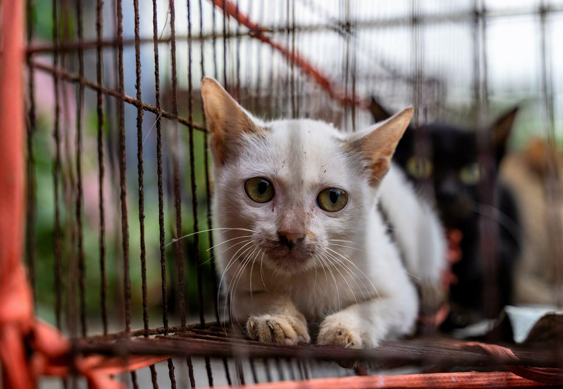 Cats in a cage at a slaughterhouse