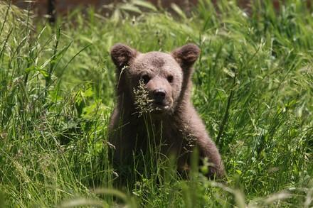 L'ourson jusqu'alors détenu dans une cave au Kosovo et sauvé par QUATRE PATTES