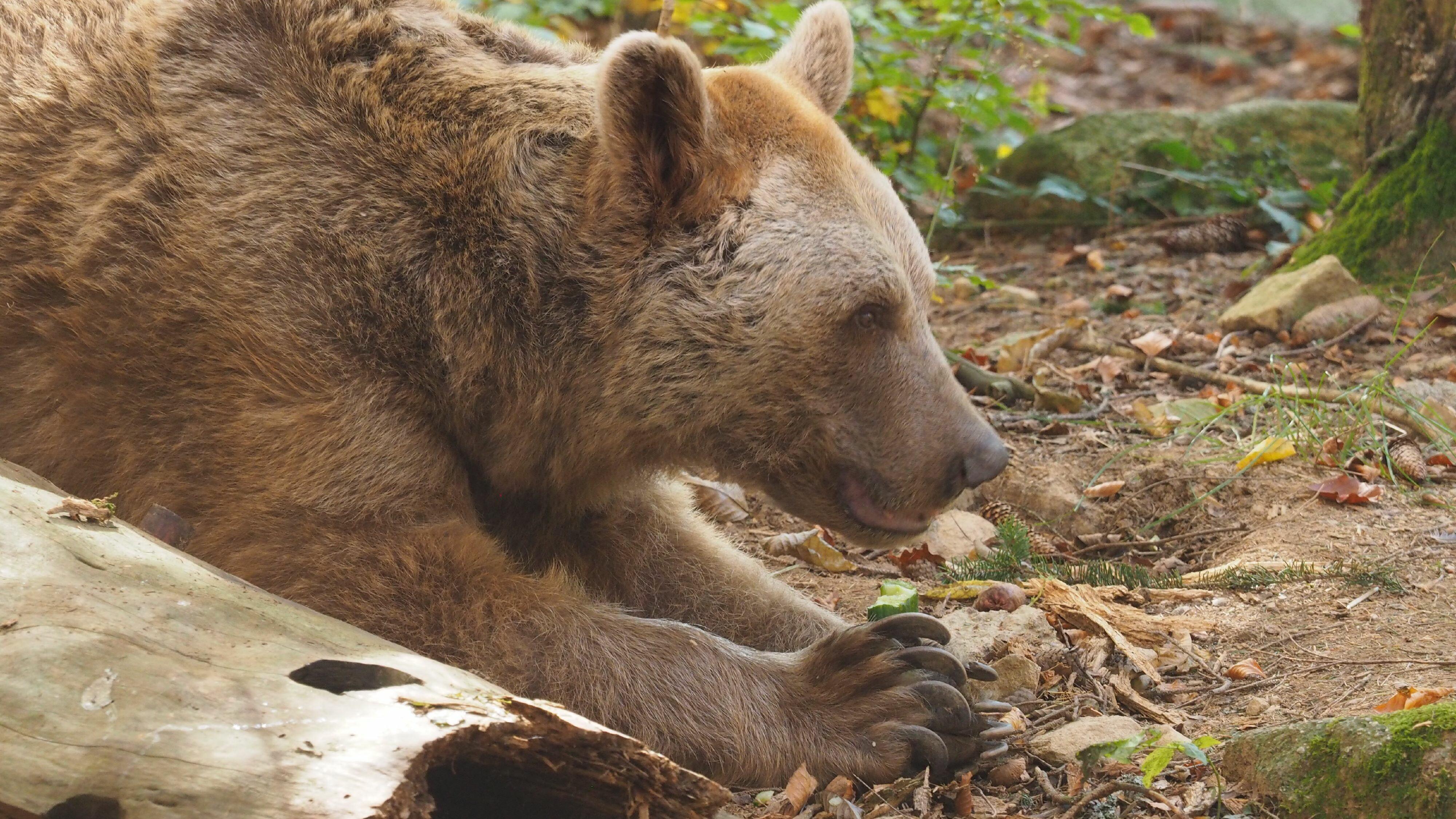 Bär Vinzenz ist ein Gurkenfan.