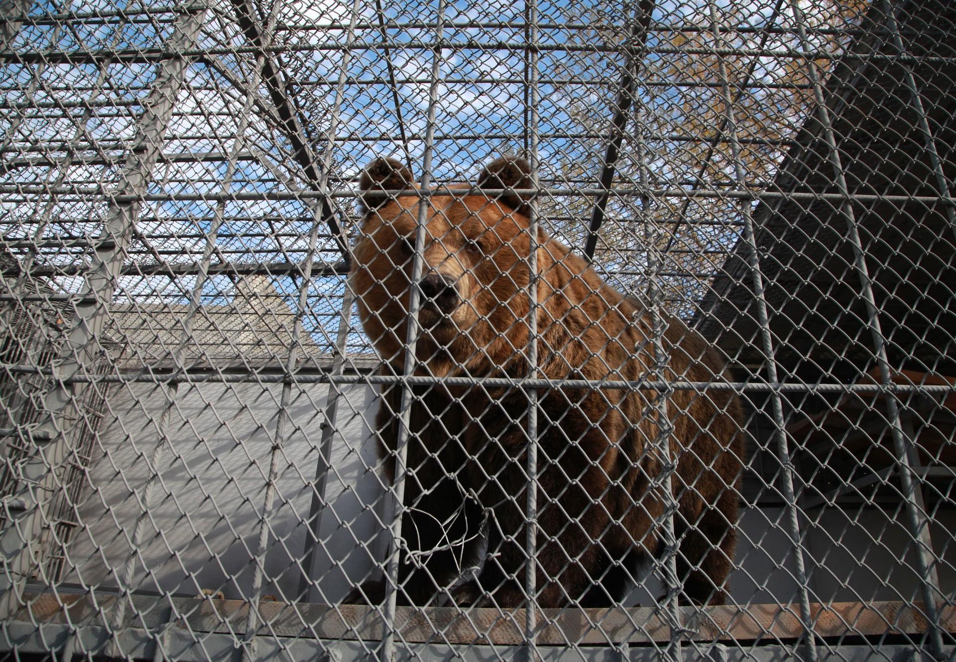 Bär in Käfig in Albanien (c) VIER PFOTEN
