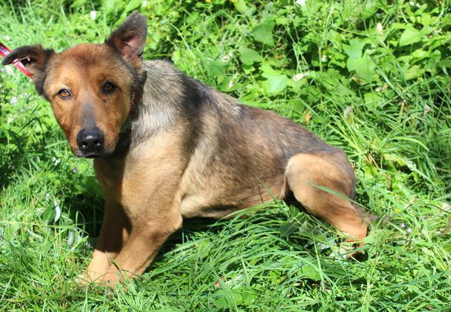 Dog Kara