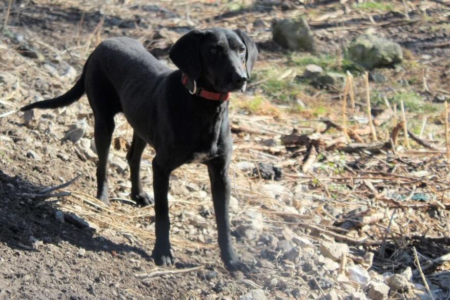 Hund Max, Bulgarien
