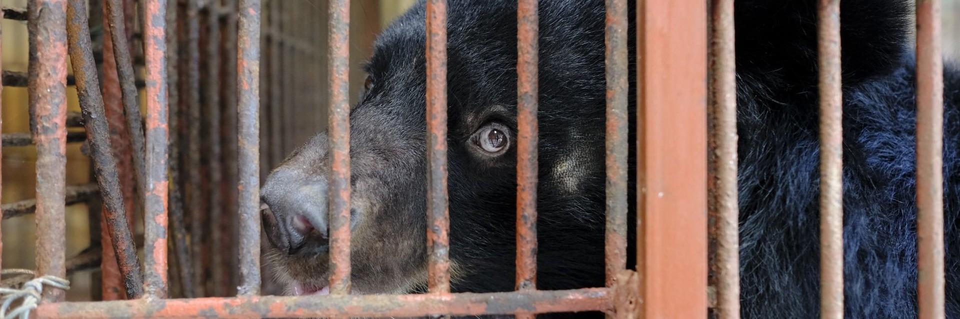 Animal Rescue dating sites Hoe om te zeggen of hij wil een hook up of een relatie