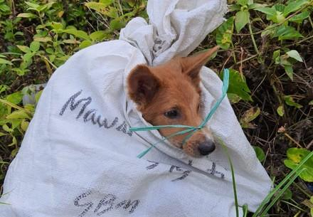 Dog Broron rescued from the dog meat trade