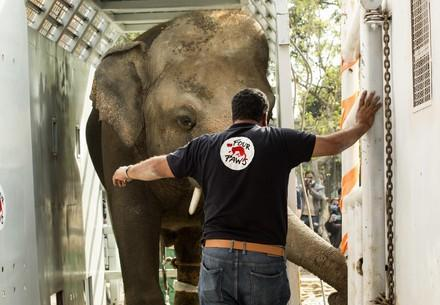 Elefant Kaavan mit Amir