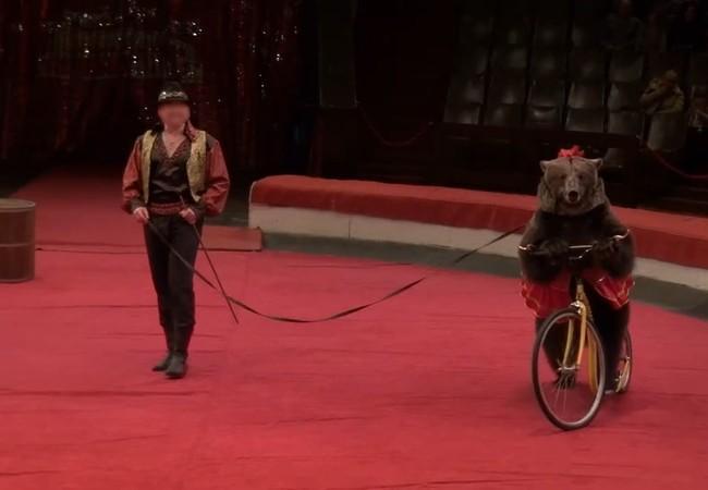 Bär Jambolina im Zirkus