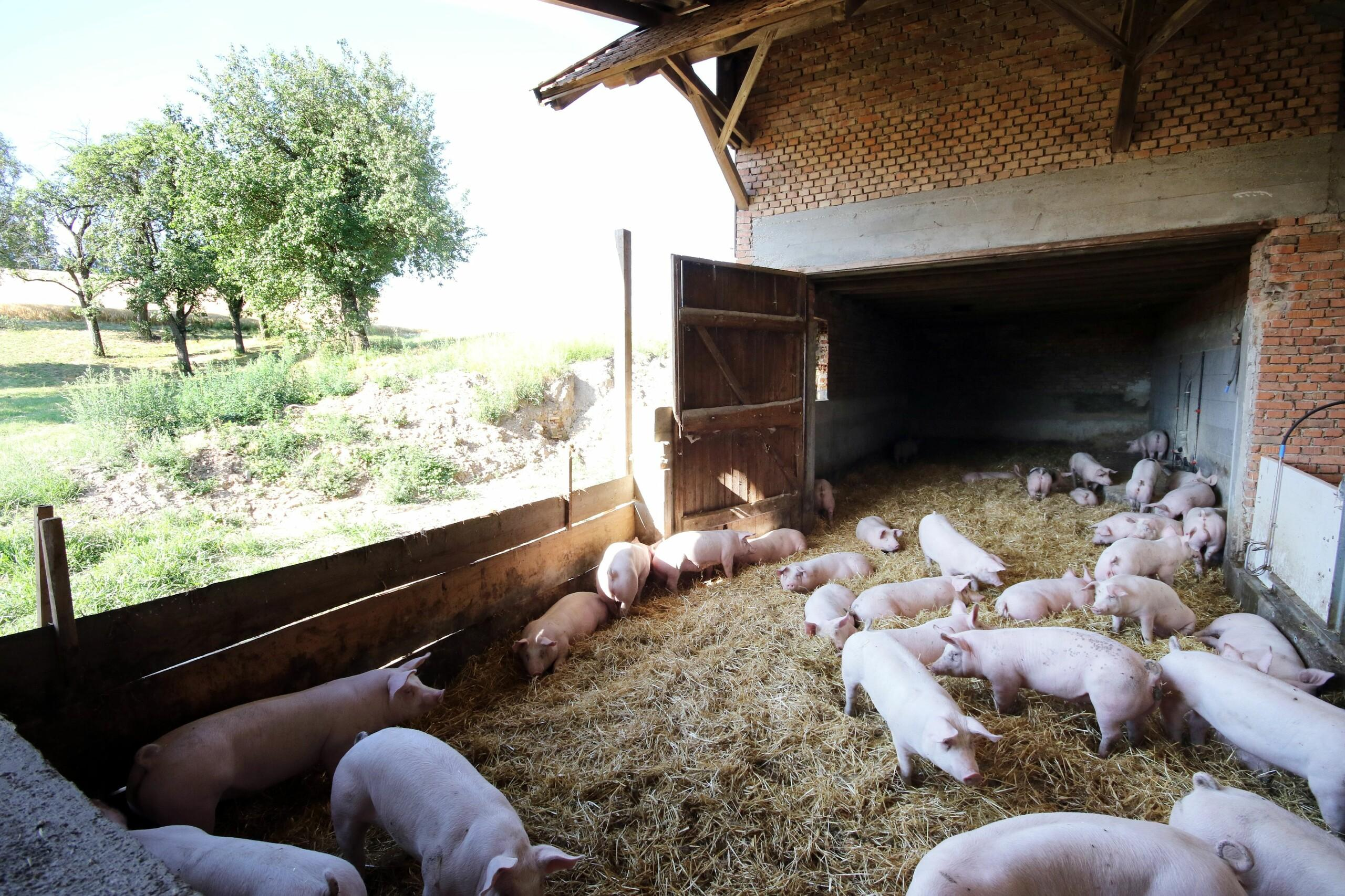 Schweinestall in Oberösterreich