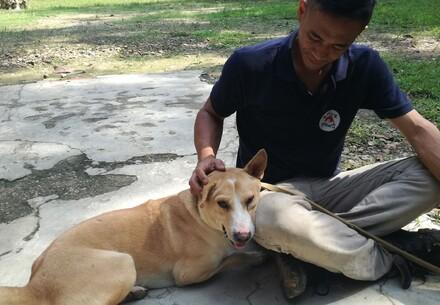Aide aux animaux errants de Bornéo