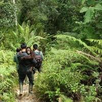 Caregivers and orphan orangutan
