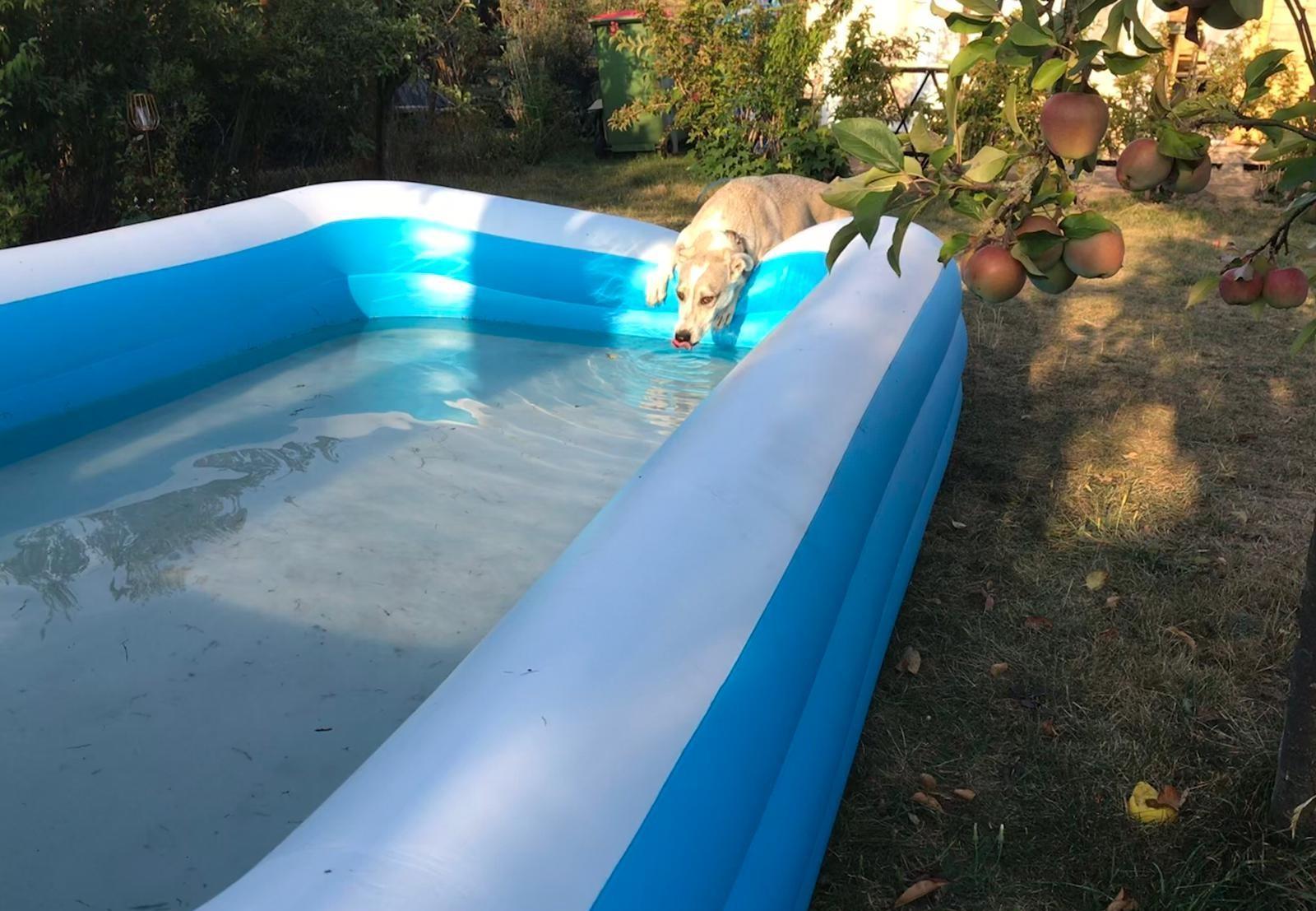 Hund am Pool