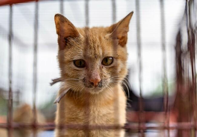 Young 'orange' cat