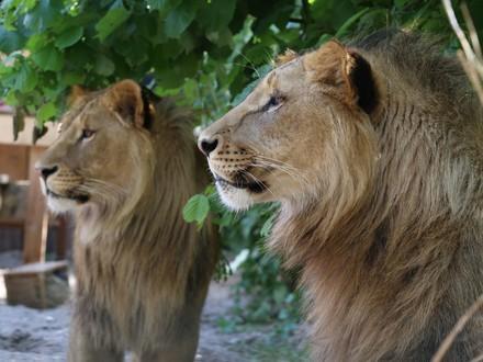 Leeuwen Masoud & Terez