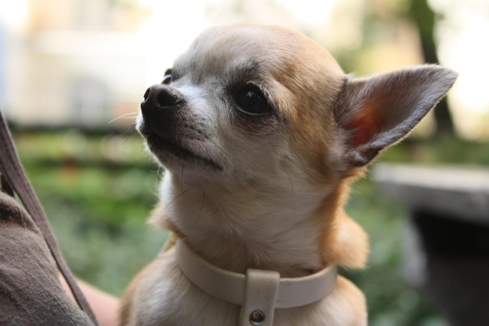 Animal Charity - Puppy