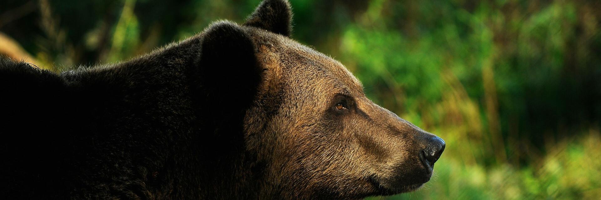 Bären-Quiz