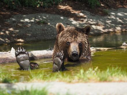 Bear Erich is taking a nap