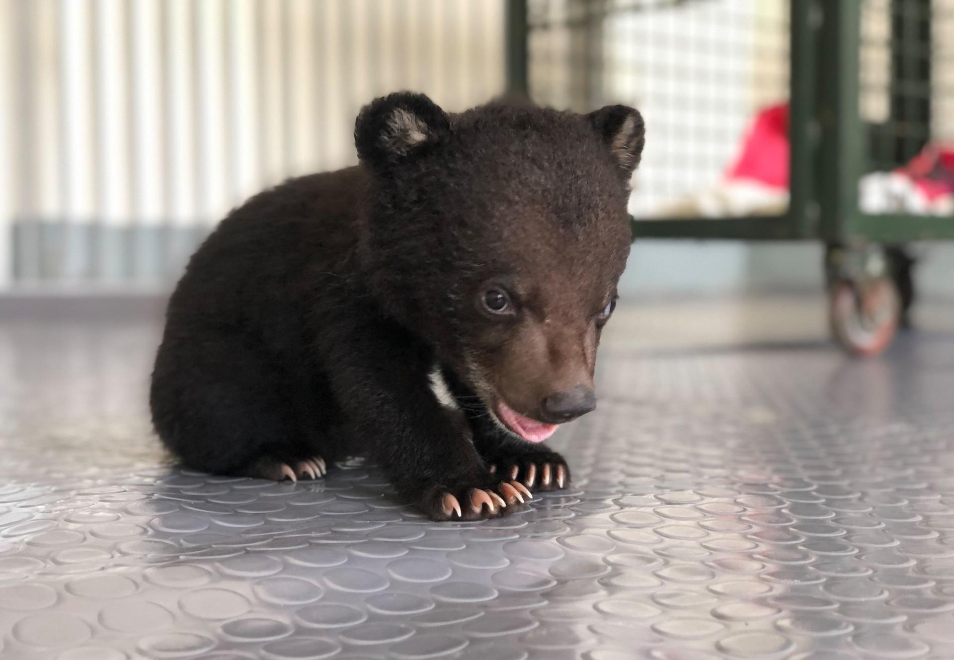 Cub Mochi finds a species-appropriate home at BEAR SANCTUARY Ninh Binh