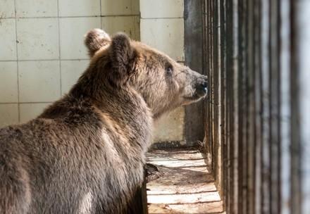 Bear Jeta