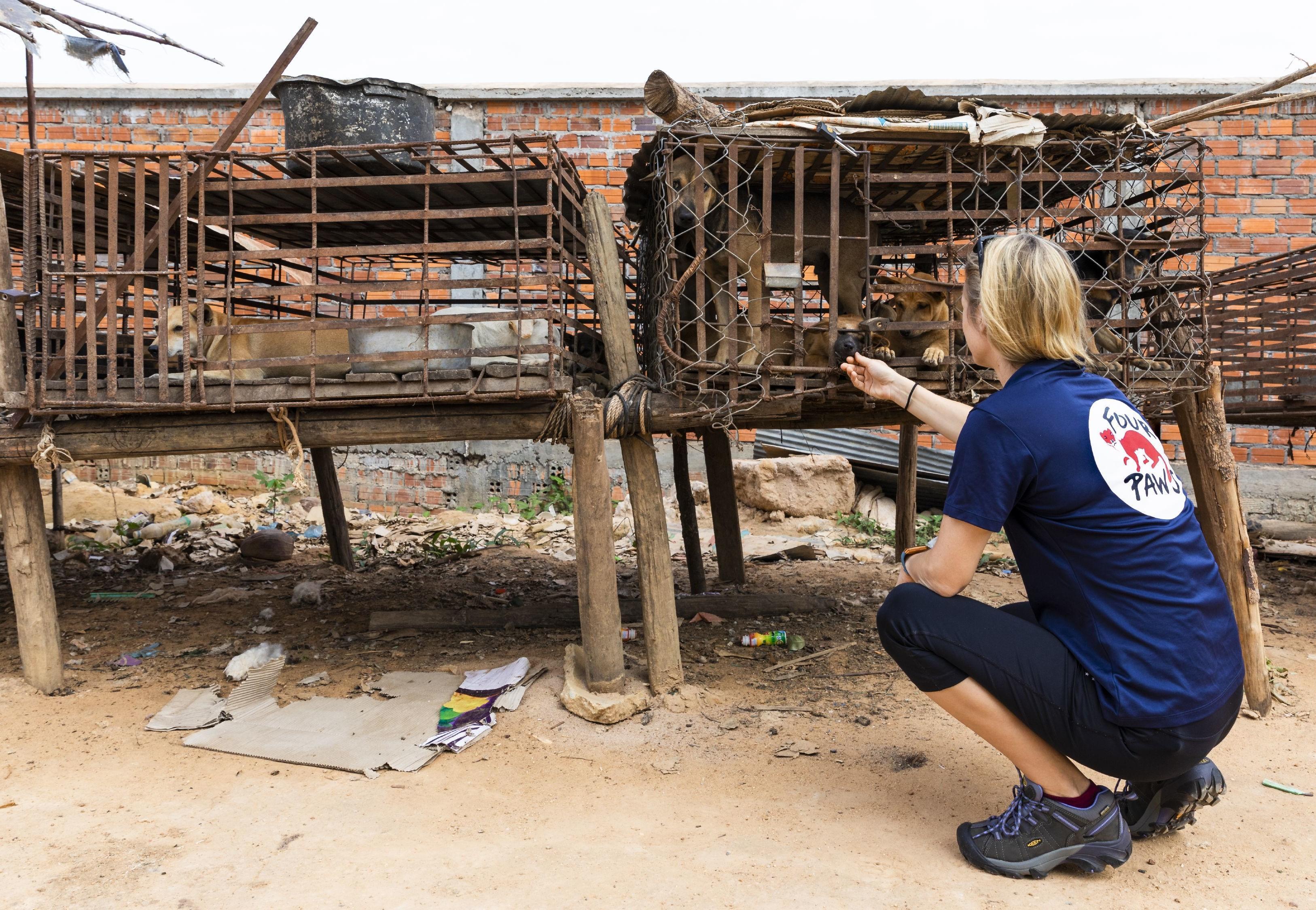 Ein Hundeschlachthaus in Kambodscha