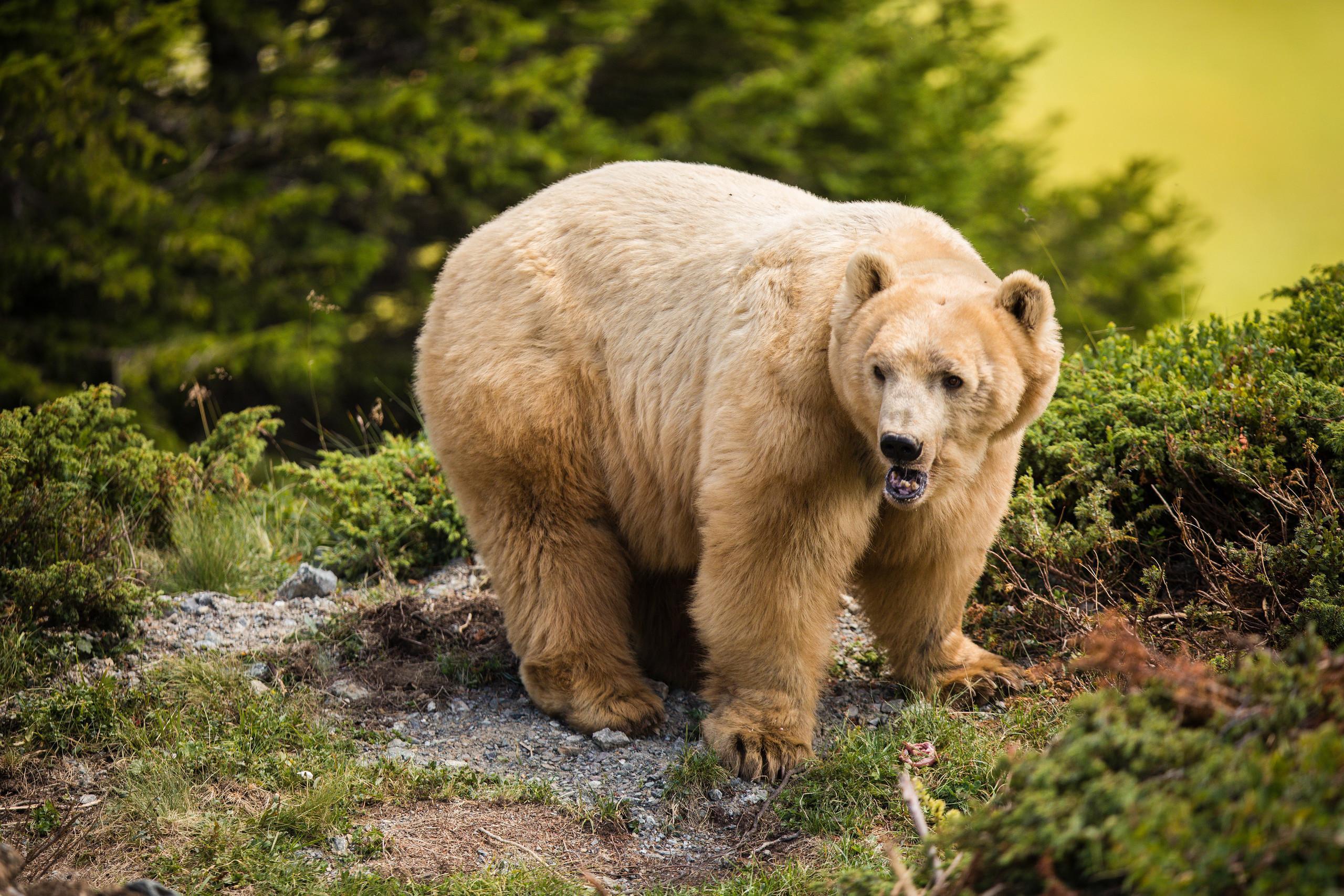 Bear Napa outside